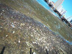 schmutziger Fluss Recife